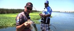 Froggin' at the Cal Delta w/Jared Lintner & Ish Monroe