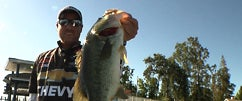 Damiki Gizzard Shad & Brute on Clear Lake w. Bryan