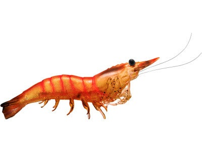 LIVETARGET Rigged Shrimp 4pk
