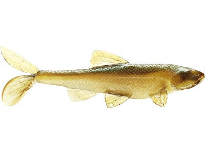 Little Creeper Garbage Minnow Swimbait 2pk