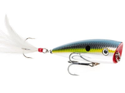 Strike King HC KVD Splash Popper