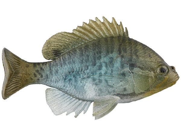 Image result for bluegill