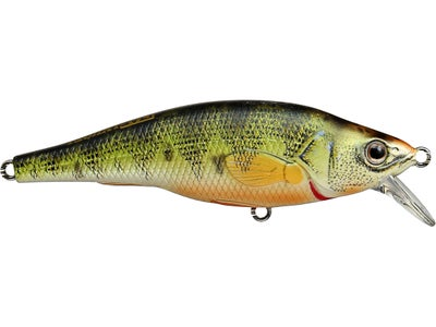 LIVETARGET Shallow Suspending Yellow Perch